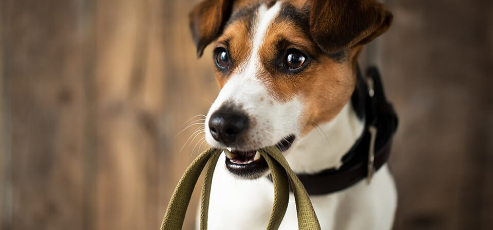 House Calls for Pets - Dog Health Care